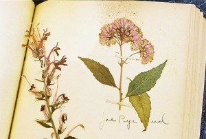 Pressed Flowers Tell Story of Climate Change